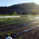 Farm Image